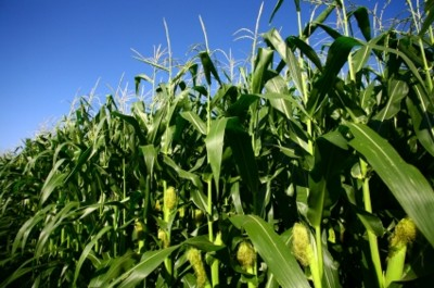 Eco mobile phone made of corn - coming from Samsung